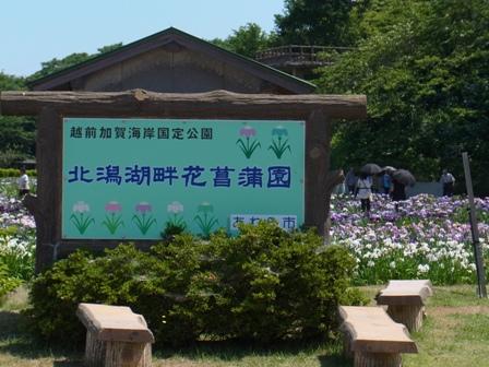 花菖蒲園1.JPG