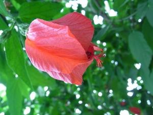 咲かない花.JPG