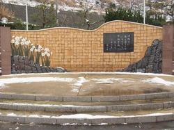 越前水仙の里公園RIMG3038.JPG